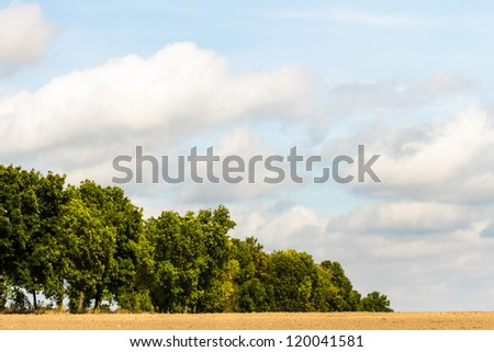 old big tree on color background with blue sky