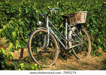 Old bike in vineyard in France