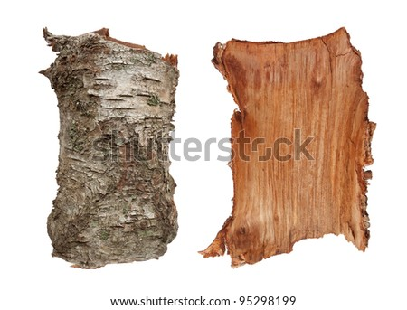 birch tree hindu single women The health benefits of birch essential birch varieties are categorized as deciduous trees and have been used pregnant women should avoid birch oil due to.