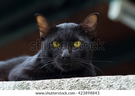 Old blackcat stare to me when hear a camera shooting sound.