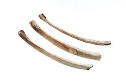 old bone isolated on white background