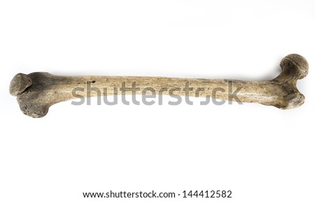 old bone isolated on white background Foto d'archivio ©