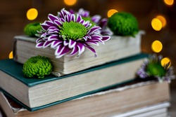 Old books and chrysanthemum flowers against a background of blurry orange lights, a dark fuzzy background.