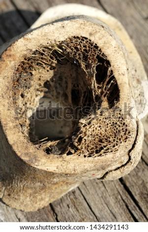 Old bovine bones in detail #1434291143