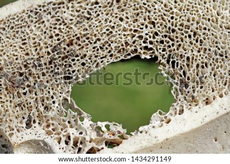 Old bovine bones in detail #1434291149