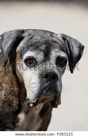 old boxer