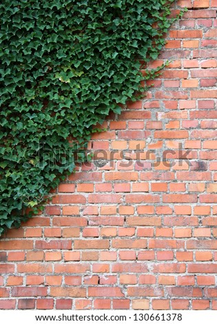 Old Brick wall with ivy plant as background