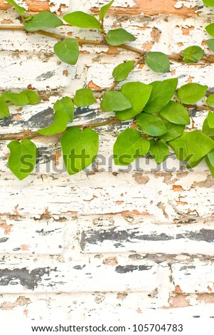 Old brick wall with leaves