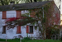 old building with red wooden shutters all wrapped in ivy