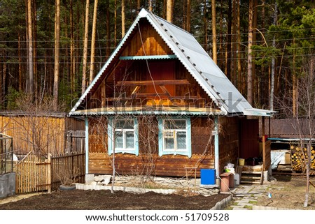 Old cabin in the pine forest