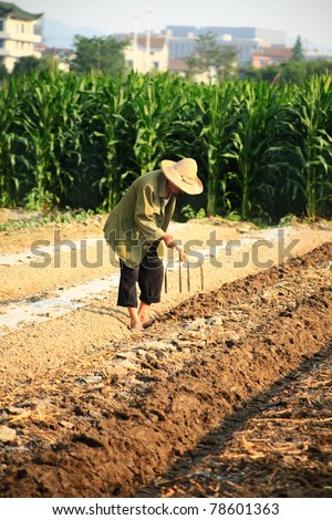 old chinese farmer with hat weeding