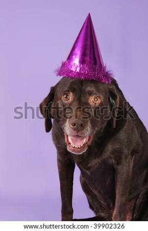 Birthday hat wearing dogs