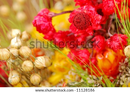 Old colorful dried plants bouquet. Floral background