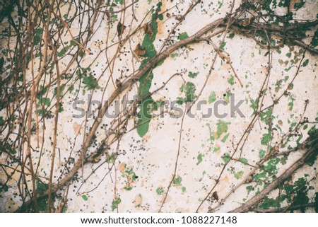 Old Concrete, Wall - Building Feature, Textured, Textured Effect, Backgrounds  #1088227148