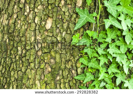 Old cracked mossy tree bark texture with green plant