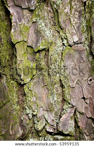 Old cracked pine bark with green moss textured background