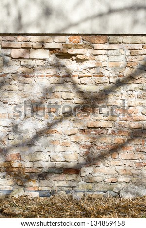 Old cracked wall with a shadow of a tree
