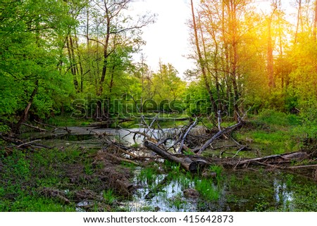 Old dead tree in forest swamp
