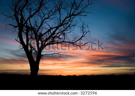 Old Dead tree silhouetted at sunset in Phoenix, Arizona