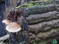 Old dead tree stump covered with lichens, moss and mushroom. biodiversity