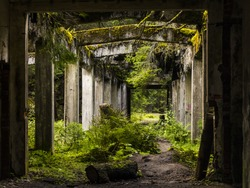 Old dirty broken ruined abandoned building among Bog, Facade ruins of industrial factory. Alley way with moss illuminated by sunlight.