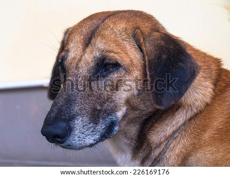 Old dog alone feel lonely, time pass alway.