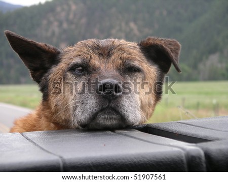 Old dog caught in the back of the truck.
