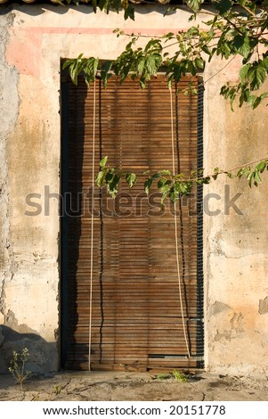 old door of a home covered by ivy