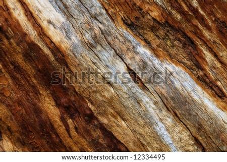 Old dry tree bark texture