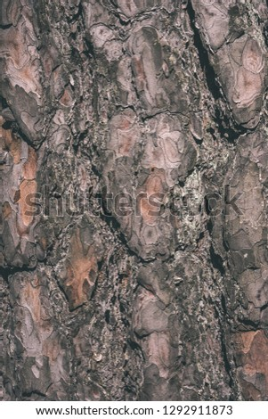 old dry tree trunk stomp texture with bark in nature - vintage retro film look