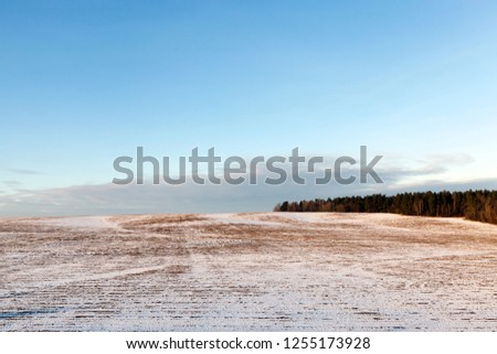 old dry vegetation covered with snow. Picture taken in the winter season, close-up