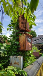 Old electric circuit box on the street, which was overgrown with weeds, was almost closed
