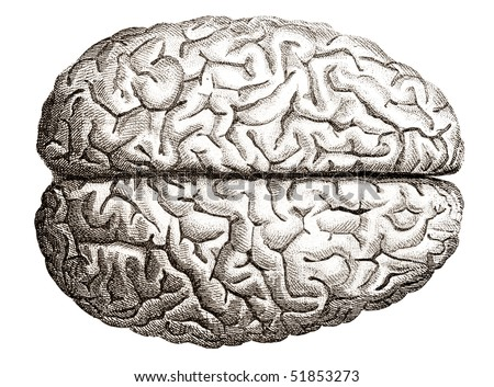 Old engraving illustration of human brains top view