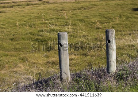old eroded wooden fence posts in big swamp wetlands bunbury western australia on a fine morning