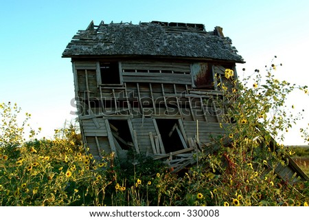 Old farm house with wild yellow sunflowers in front of it.