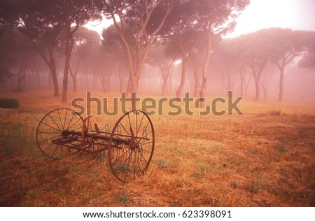 Old farm machinery and maritime pines in central Italy