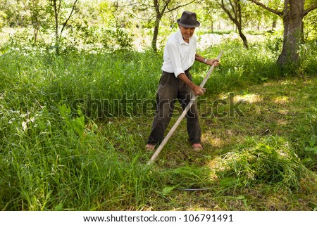 Old farmer mowing the lawn near the forest with a vintage scythe