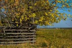 old fence made of wooden poles