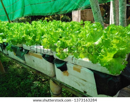 Old foam boxes that are not used, can be used to plant vegetable trees, to eat the garden. To reduce the amount of waste to zero or to fix waste to be worth