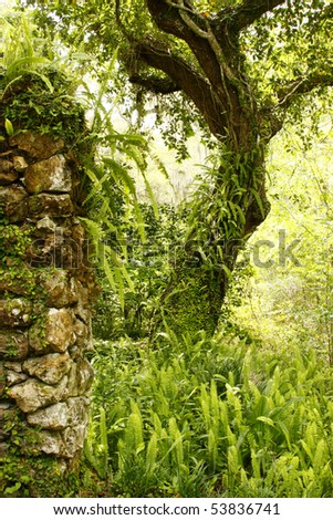 Old Garden Wall, Tree and Ferns
