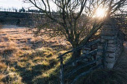 Old gate, sunshine and tree