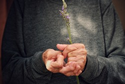 Old grandmother with deformity on both hands, arthritis,osteoporosis, rheumatism, holding lavender