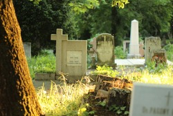 Old graves in historic cemetery illuminated by the golden midday sun. Warm light illuminates plants and trees