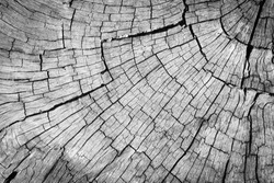Old gray cracked wood surface for texture background.