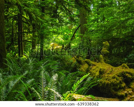 old green forest in british columbia #639338362