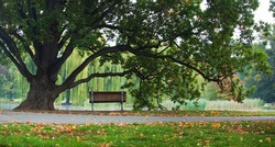 old green oak tree and bench in park