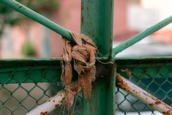 Old green street rusty metal fence with a rag