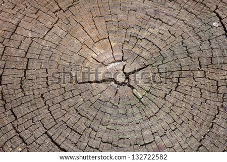 Old grunge stump background