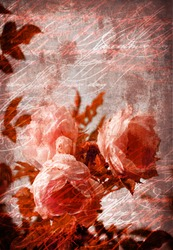 Old grunge vintage postcard with beautiful flower/Flower Card/Beautiful rose with buds/Valentines day card