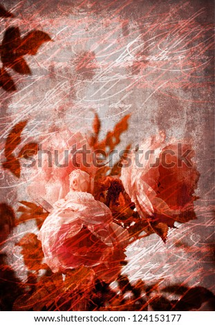 Old grunge vintage postcard with beautiful flower/Flower Card/Beautiful rose with buds/Valentines day card - stock photo